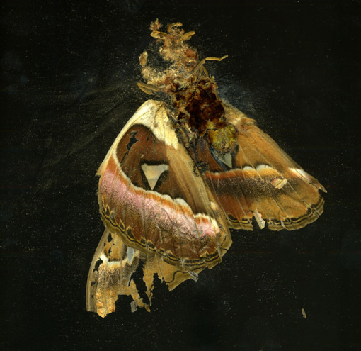 COLLISHAW_INSECT.LOW.jpg