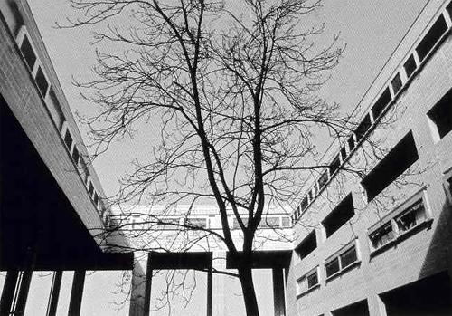 albero osplarino.jpg