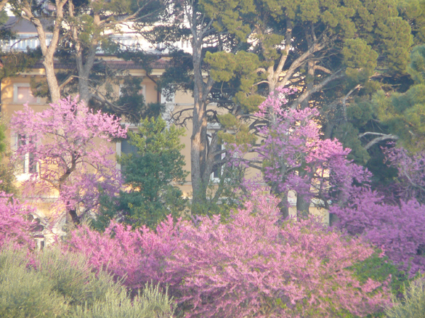 il giardino .jpg