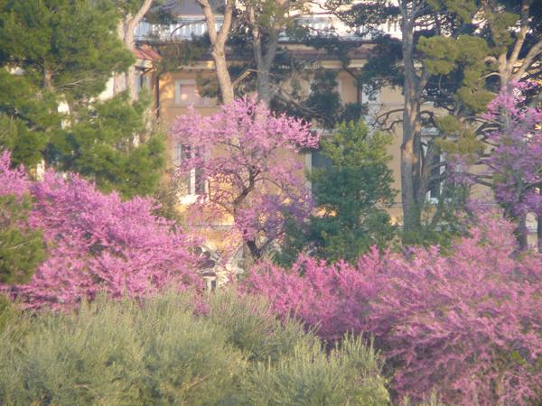 il giardino di fronte casa mia.jpg